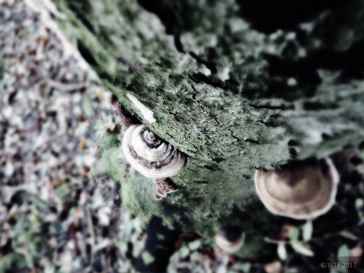 Baum im Külf
